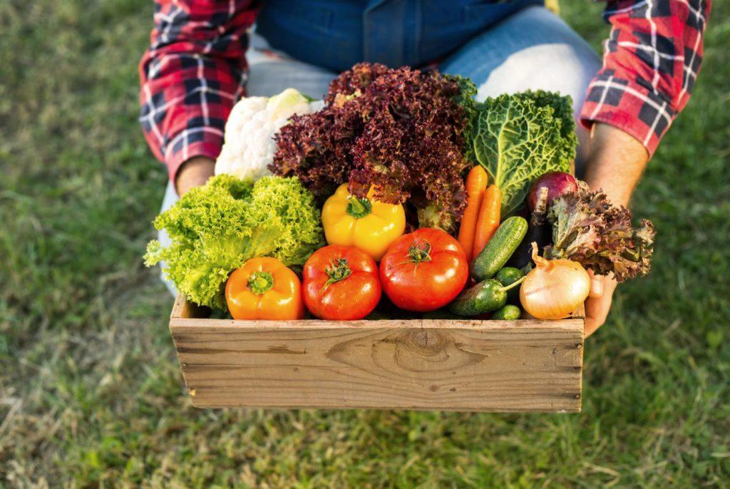 Nachhaltige Ernährung Mann hält Gemüse in Holzkorb aus deutscher Landwirtschaft